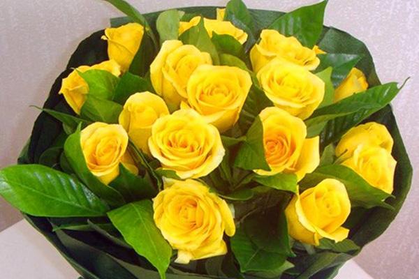 19朵黄玫瑰的花语,代表什么意思